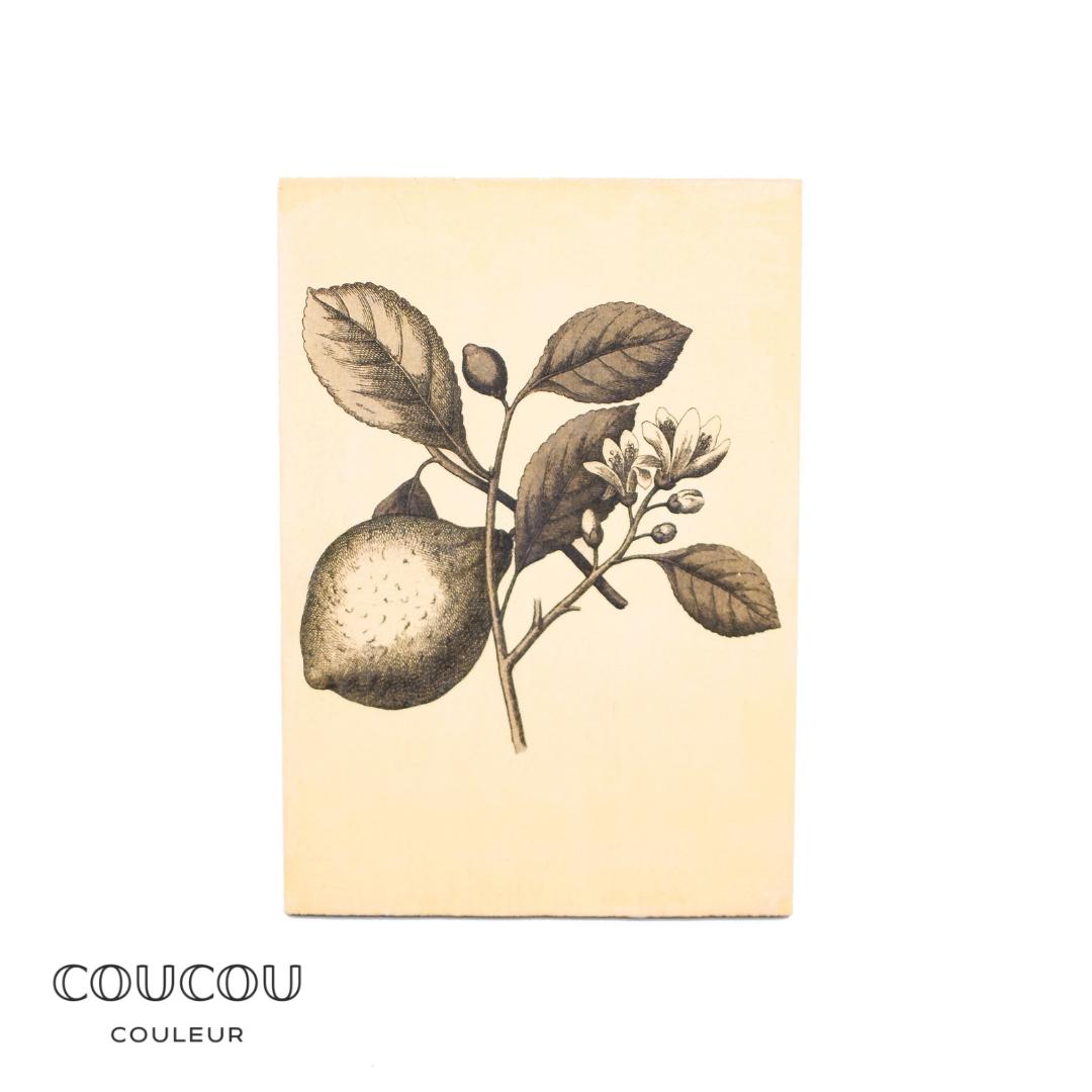 Foto-Transfer-Anleitung-Coucou-Couleur-Kreidefarbe-Wanddeko-Midi